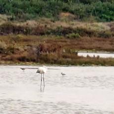 Bird watching at Ria Formosa Algarve